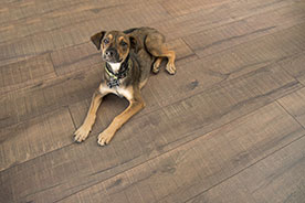 Dog on cork flooring | Hughes Floor Coverings Inc